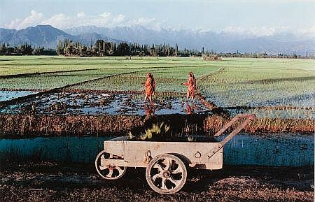 RAGHUBIR SINGH (Indian, 1941-1999) Transplanting Paddy,
