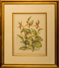 Seven Botanical Prints in Giltwood Frames 19-1/2 inches