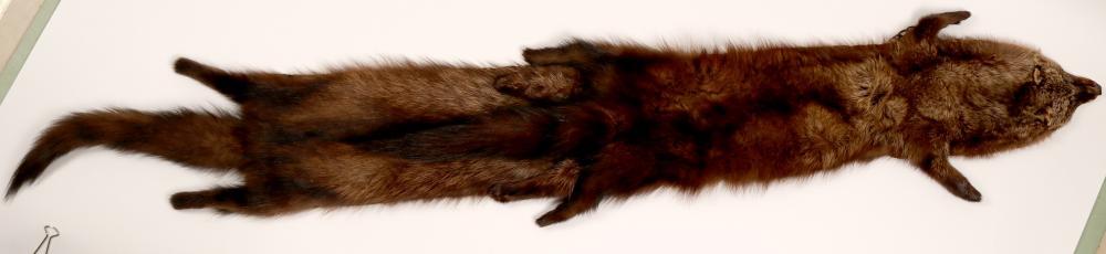 Shawl, Fur   (91341)