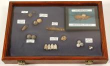Civil War Artifacts Display