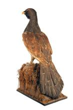 A FULL-MOUNT OF A CAPERCAILLIE,