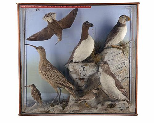A VINTAGE CASED COLLECTION OF SEA BIRDS,