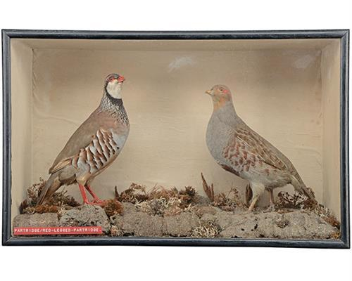 A CASED SET OF TWO FULL-MOUNTED PARTRIDGES,