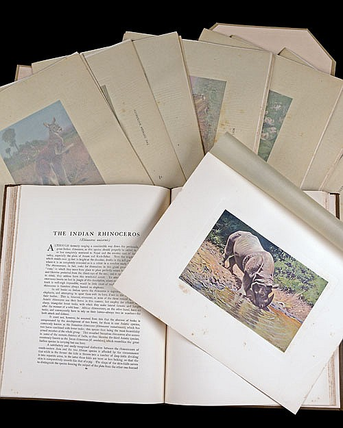 WILHELM KUHNERT AND R. LYDEKKER F.R.S. 'ANIMAL PORTRAITURE' BEING FIFTY STUDIES BY WILHELM KUHNERT,