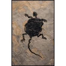 BAENIDAE TURTLE FOSSIL MURAL - 50 MILLION YEARS OLD