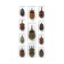 20 X 24 RHINO BEETLE MOSAIC NATURAL SPECIMEN ART BY CHRISTOPHER MARLEY