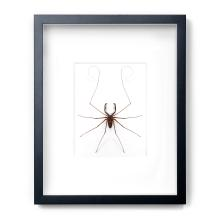 16 X 20 TAILLESS WHIP SCORPION NATURAL SPECIMEN ART BY CHRISTOPHER MARLEY
