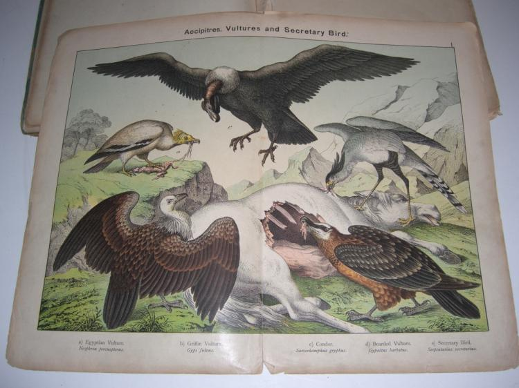 Natural History of the Animal Kingdom bird book