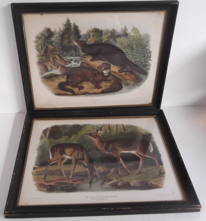 2 J.W. Audubon & J.J. Audubon animal prints