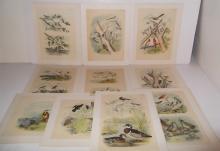 25 20th c. bookplate bird lithographs