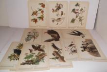 40 20th c. Bird  bookplate lithographs