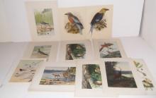 30 bird & animal bookplate lithographs