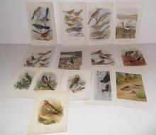 29 bird  bookplate lithographs