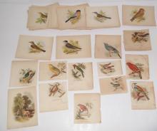 59  20th c. bird bookplate lithographs
