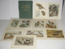 93 Birds of New York bookplate lithographs
