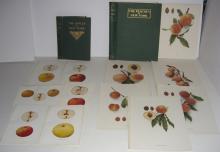 122 bookplates of NY apples & peaches
