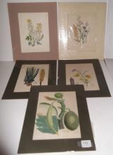 5 18th/19th c. floral bookplate engravings/etching