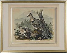 Daniel Giraud Elliot (Am., 1835-1915) c. 1870-1872; handcolored lithograph