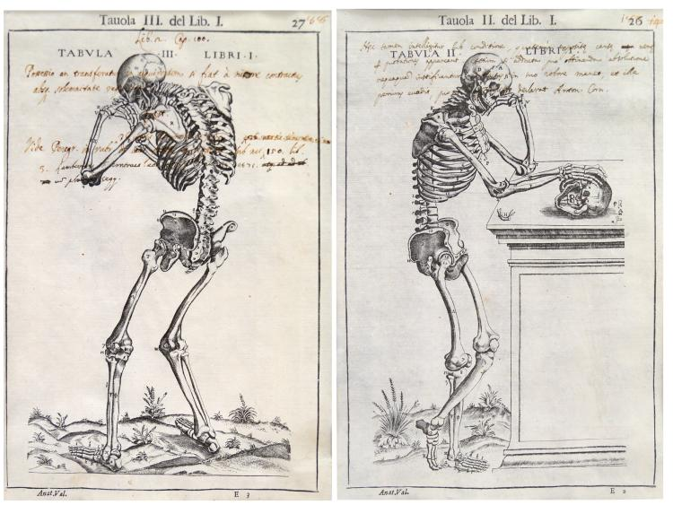 CONTINENTAL SCHOOL (18TH CENTURY), LOT (2) WOOD ENGRAVINGS, ANATOMICAL/SKELETONS WITH INK NOTATIONS. SIGHT 10 1/4 X 6 3/4