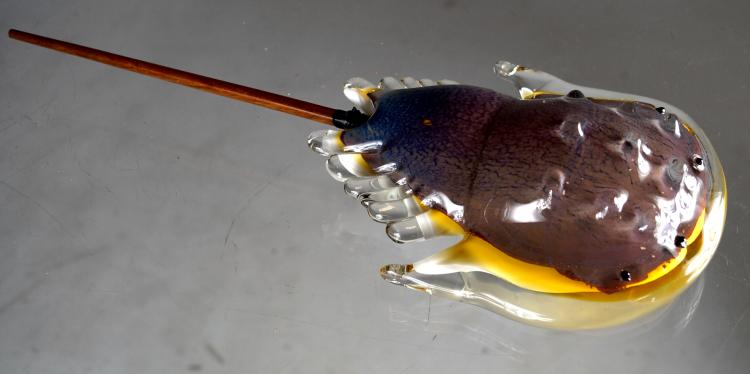 MURANO GLASS HORSESHOE CRAB, LENGTH 14