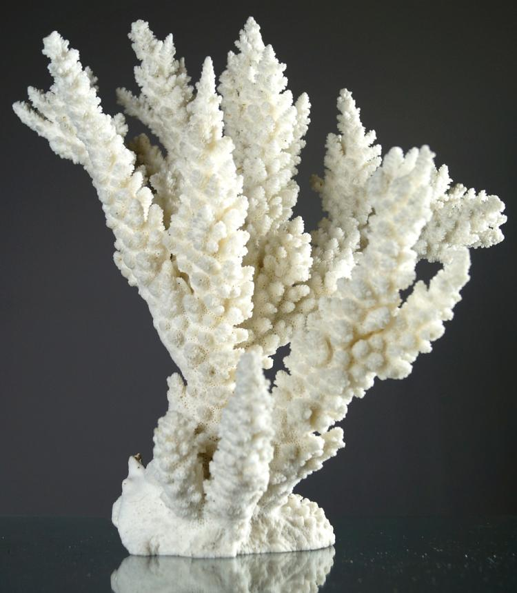 BRANCH CORAL SPECIMEN. HEIGHT 14