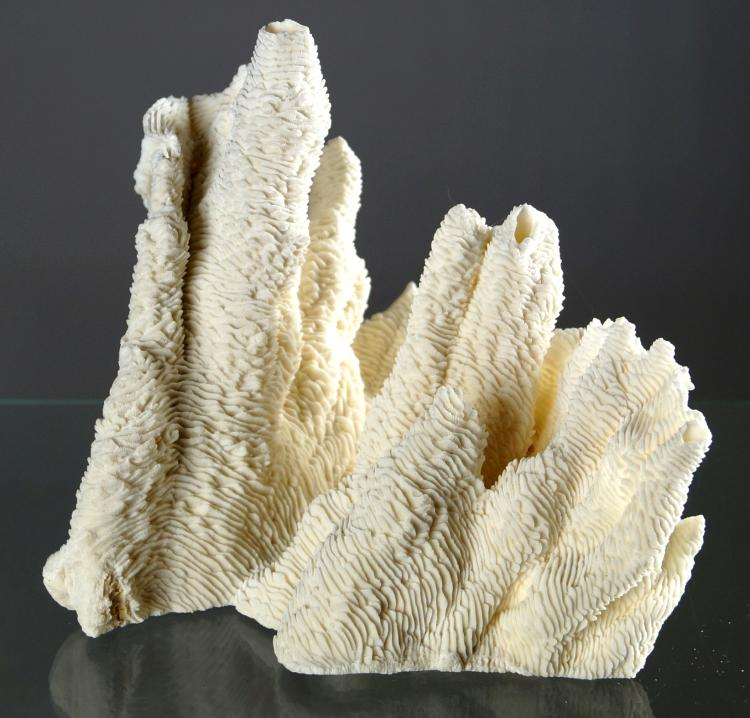 MERMLINA CORAL SPECIMEN. HEIGHT 9