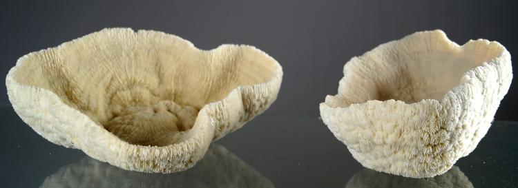 LOT (2) BOWL CORAL SPECIMENS. HEIGHT 4