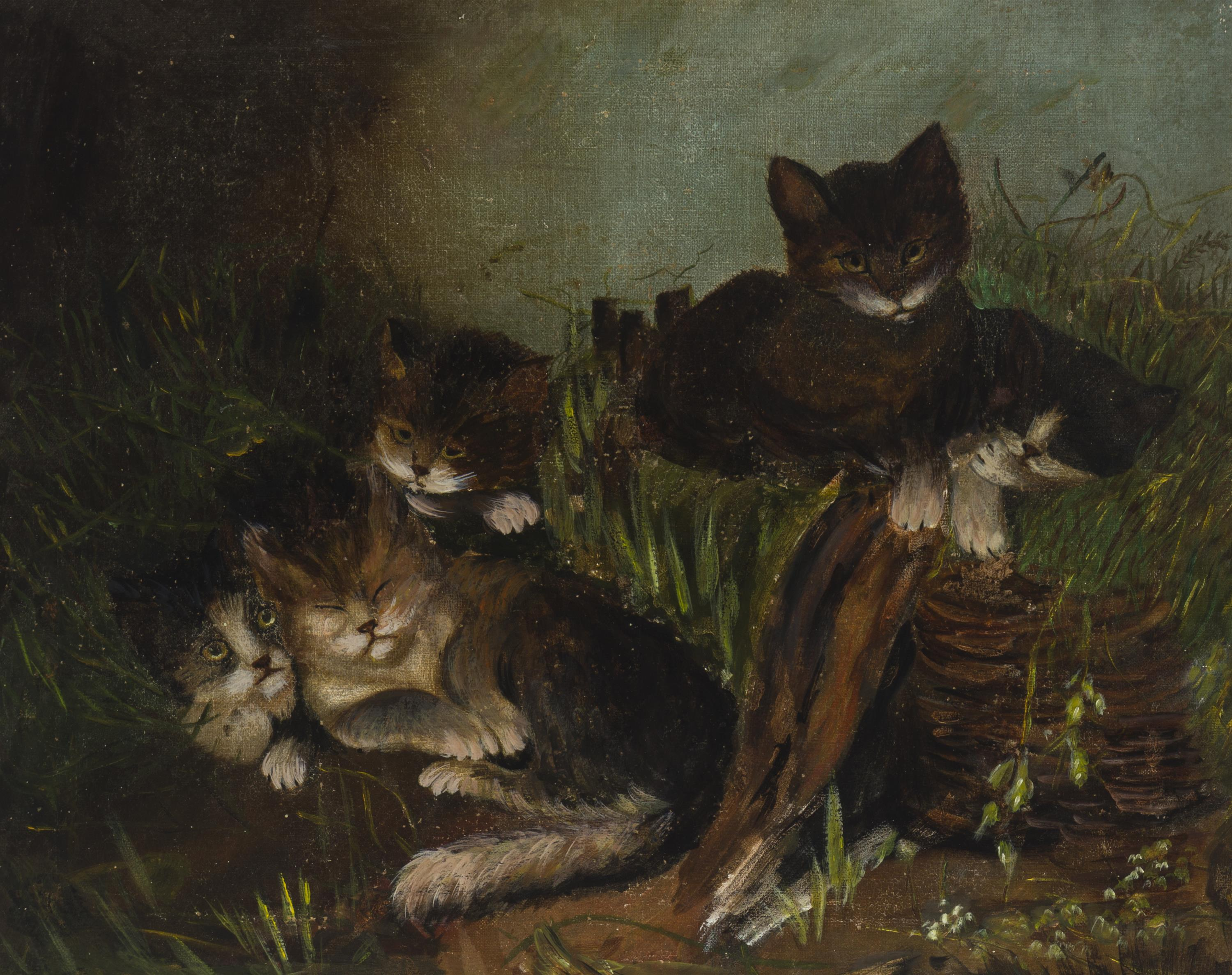 Five cats in a field
