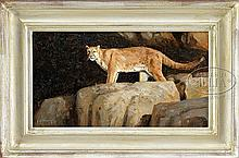GRANT HACKING (American, 1964-) MOUNTAIN LION'S LAIR