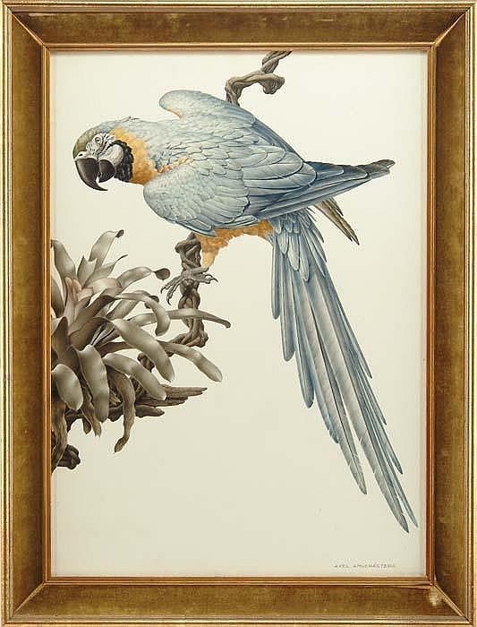 AXEL AMUCHASTEGUI (Argentinian, 1921) TROPICAL MACCAW
