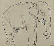Braumann, Max  (1880 München - Lissabon 1969). Elefant. Tuschzeichnung