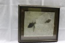 Framed Fossil of Fish
