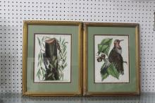J.M. Seligmann Etching of a Pigeon Hand Colored & Another of Two Finches 18th C. Pair