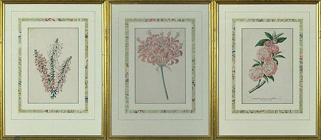 James Andrews British (1801-1876) Three (3) Hand Painted Botanical Lithographs, perhaps Bookplates. Printed by Vincent Brooks. Framed Under Glass. Printed Signatures. Two (2) of the Three appear to be James Andrews and the third appears not to be