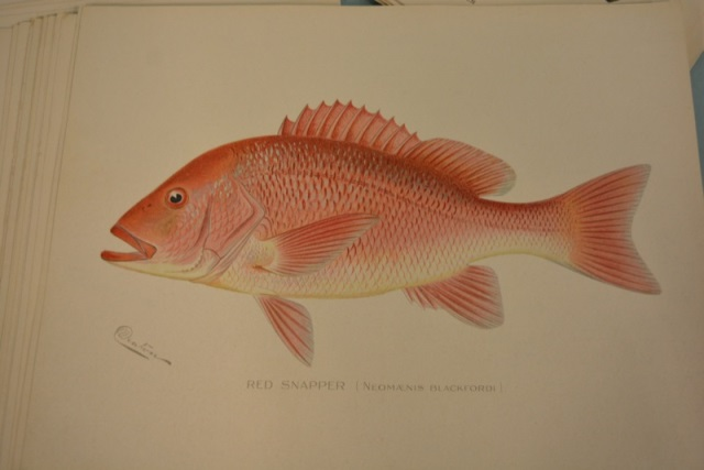 Fish and game of the state of new york prints for New york state fish