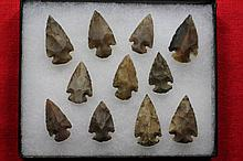 11 Bird Points, Some Translucent, R. Fletcher Collection, Indiana