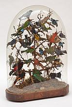 A DETAILED BIRD DIORAMA, UNDER A GLASS DOMELABELLED 'PRESERVED BY / J. COOPER / 28 RADNOR STREET / ST LUKES'