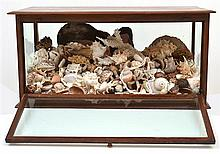 A LARGE SHELL DIORAMA IN A GLAZED CABINET