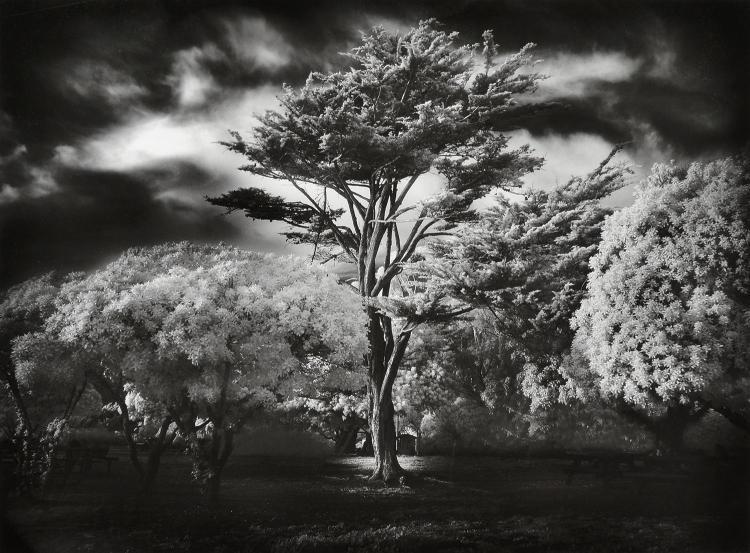 MITCH DOBROWNER (AMERICAN) Wind Swept Tree 2005/2007 pigment print