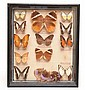 FRAMED BUTTERFLY DIORAMA WITH ENTOMOLOGICAL LABELS