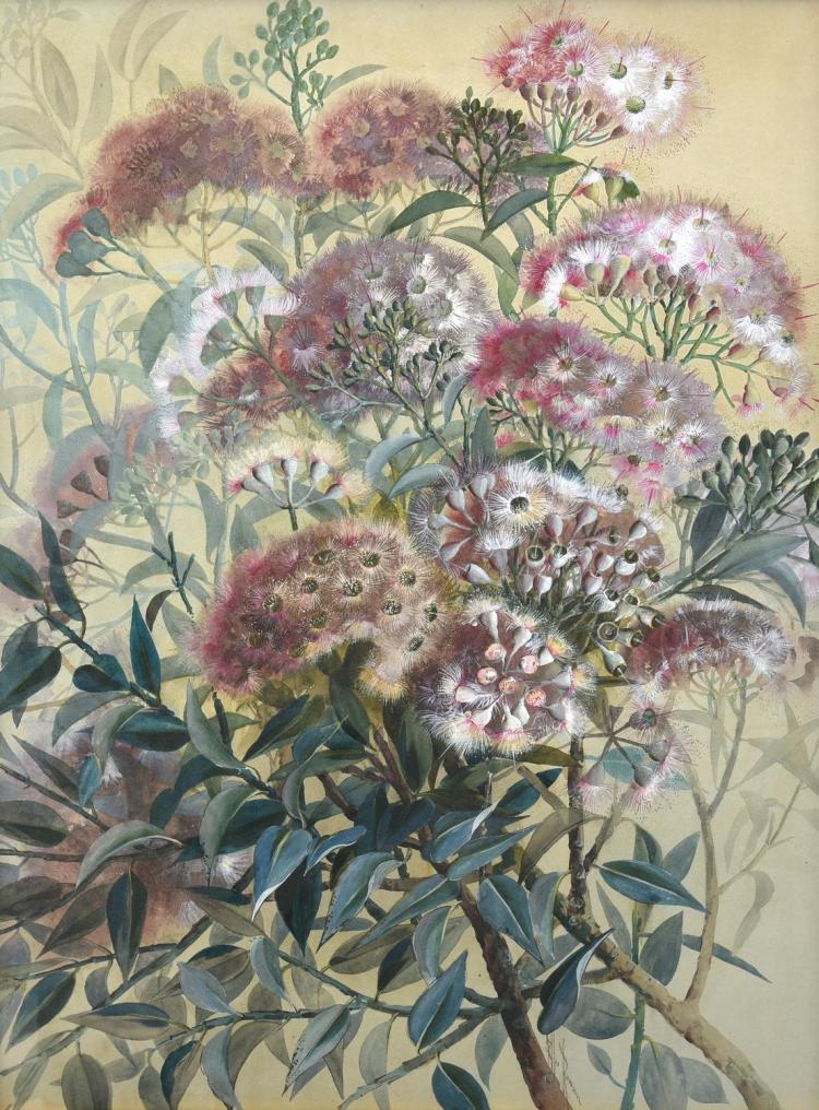 ELLIS ROWAN (1848-1922) Botanical Study, Pink flowered eucalyptus watercolour