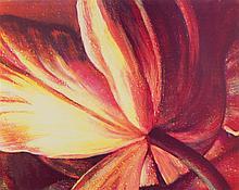 TIM MAGUIRE (born 1958) Open Tulip lithograph edition 69/80