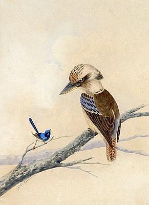 NEVILLE WILLIAM CAYLEY (1886 - 1950) Kookaburra