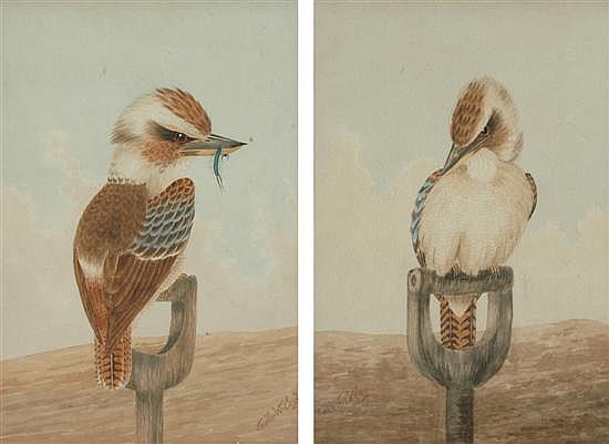 Neville W. Cayley (1886-1950) Pair of Kookaburras watercolour (two)
