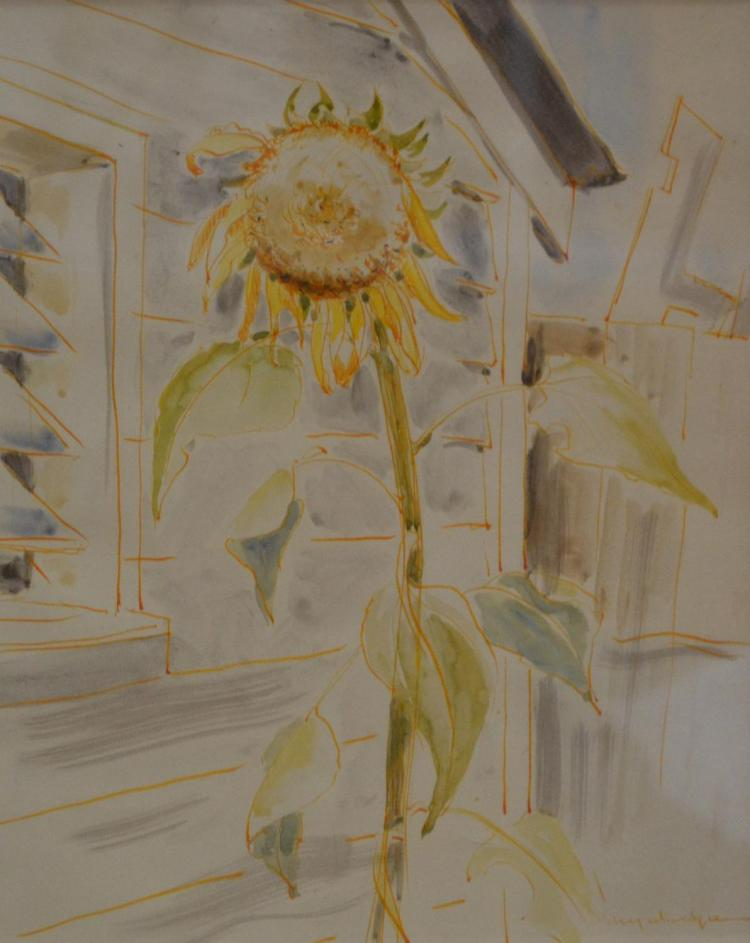 MARY MACQUEEN, SUNFLOWER, WATERCOLOUR, 31 X 25CM