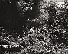 ROBERT ADAMS (AMERICAN, BORN 1937) Bulldozed slash, Tillamook County, Oregon, 1976-77 silver gelatin print