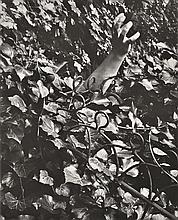 EDOUARD BOUBAT (FRENCH, 1923-1999) Hand silver gelatin print