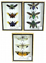 (3) Pieces New Framed Insects