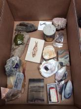 Shells & Fossil Box Lot
