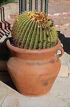 Terra Cotta Pot with Cactus